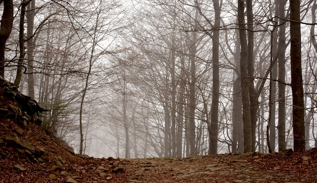 Floresta em plena temporada de outono