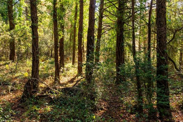 Floresta encantada no outono