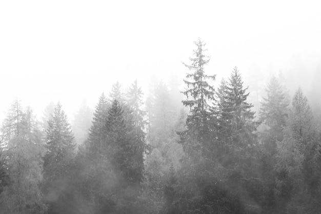 Floresta enevoada em preto e branco