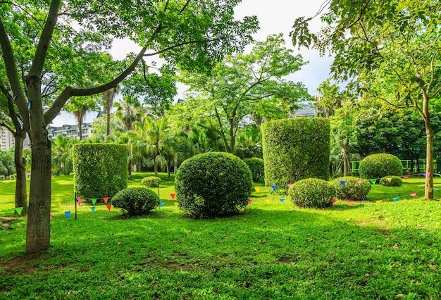 Floresta ensolarada e pastagens no parque