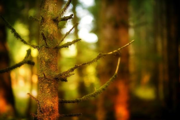 Floresta escura e árvores