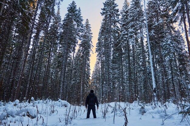 Floresta escura, um passeio na mata antes do natal