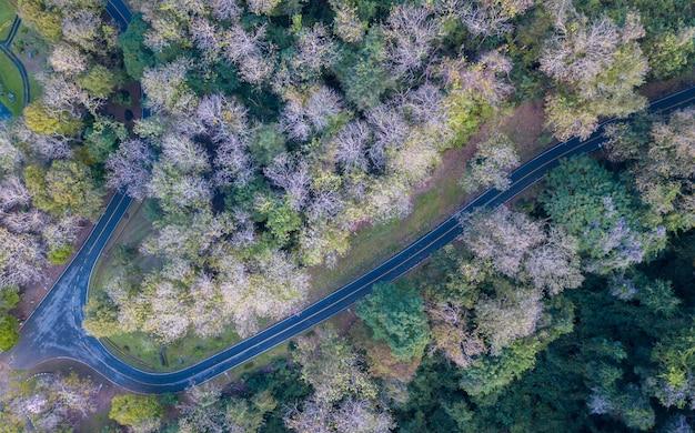 Floresta estacional decidual e estrada perto da represa sirikit