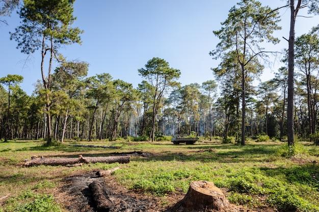 Floresta foi destruída e queimada para área agrícola tailândia