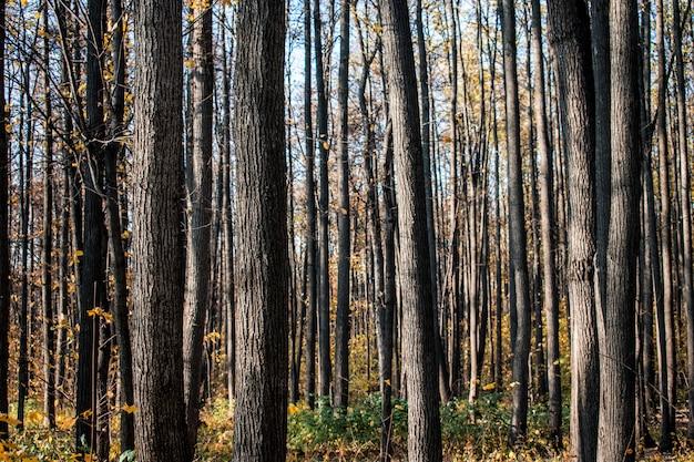 Floresta folhas textura fundo pano de fundo outono