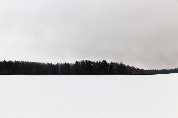 Floresta fotografada durante o inverno após a última queda de neve, neblina e silhuetas de espaço de baixa visibilidade de árvores e névoa no campo