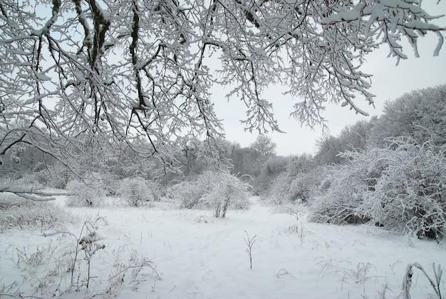 Floresta gelada de inverno com belas árvores