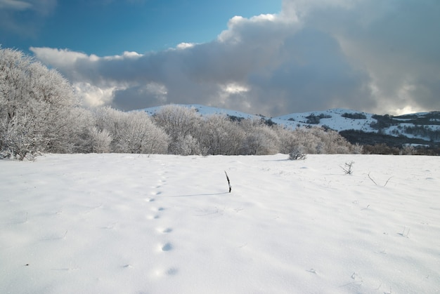 Floresta gelada de inverno