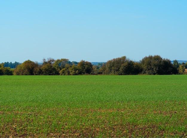 Floresta horizon em fundo de paisagem de campo verde