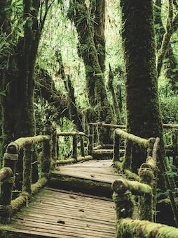 Floresta húmida em doi inthanon national park, tailândia