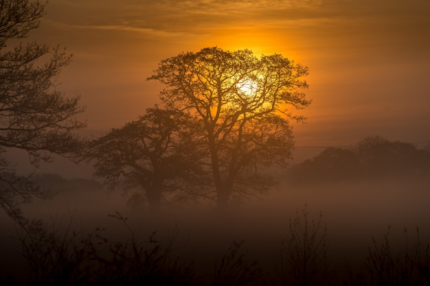 Floresta incrível e o pôr do sol