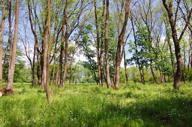 Floresta jovem na primavera