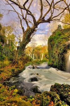 Floresta mágica com um rio