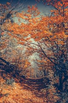 Floresta majestosa colorida com vigas ensolaradas folhas de outono brilhantes cárpatos ucrânia europa beleza