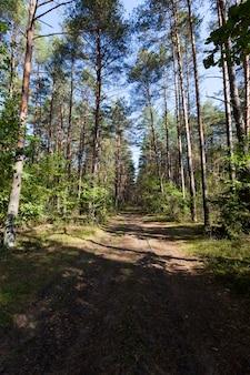 Floresta mista no outono