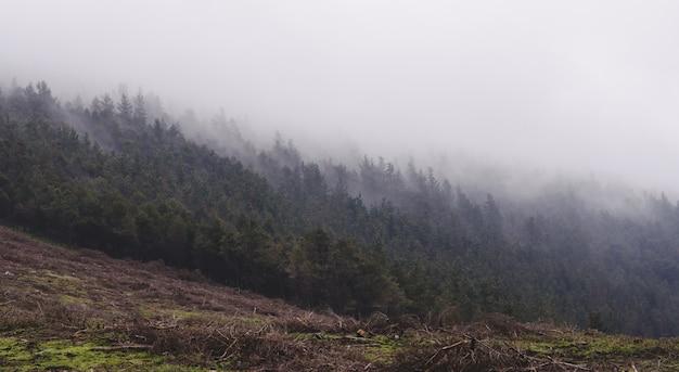 Floresta misteriosa com névoas ao amanhecer