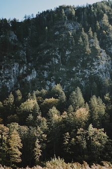 Floresta misteriosa congelada em um dia quente de inverno, mostrando como o inverno pode ser bonito