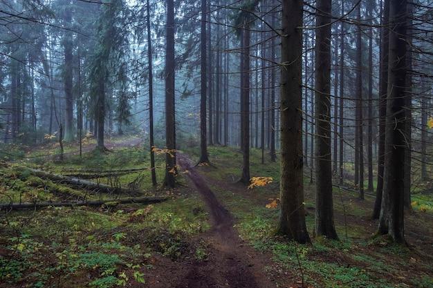 Floresta mística nebulosa do norte na noite de outono