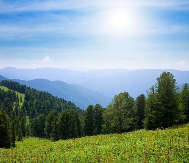 Floresta montanhas no dia ensolarado