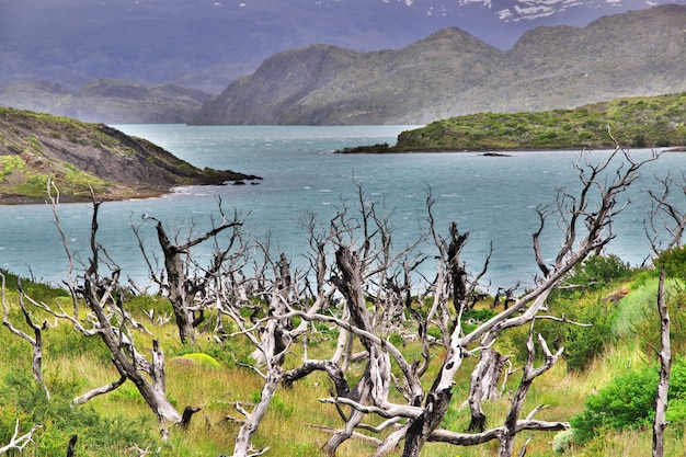 Floresta morta no parque nacional torres del paine, patagonia, chile