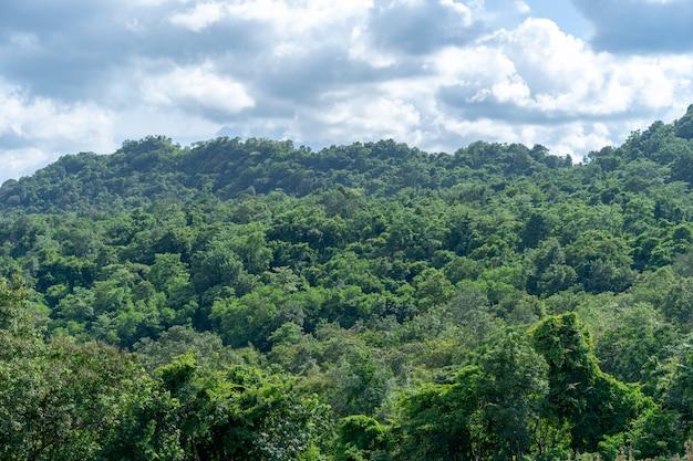 Floresta na montanha depois da chuva faz uma boa atmosfera.