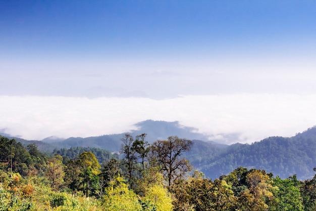 Floresta na montanha no distrito de pai, província de maehongson, tailândia