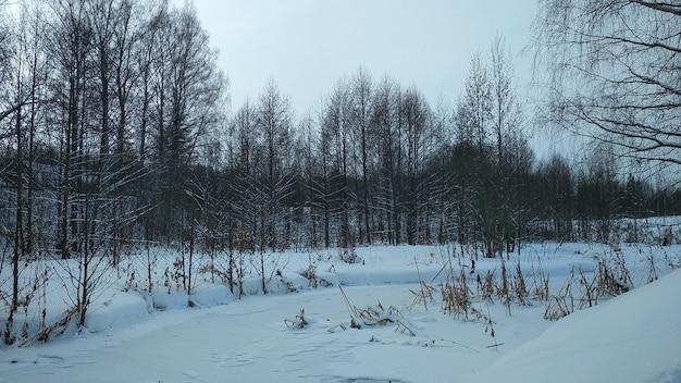 Floresta na neve no inverno