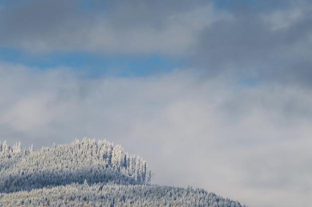 Floresta nas colinas cobertas de neve