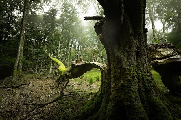 Floresta nebulosa de artikutza nas montanhas bascas