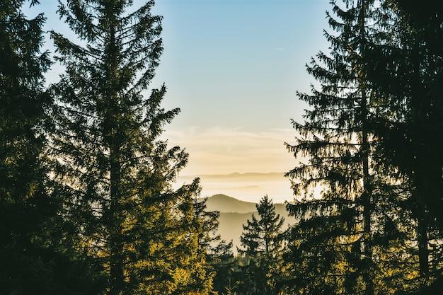 Floresta negra na alemanha em frente às montanhas