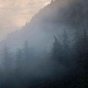 Floresta nevoenta, distrito regional skeena-queen charlotte, haida gwaii, graham island, columbia britânica