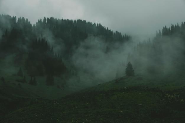 Floresta nevoenta escura mística nas montanhas.