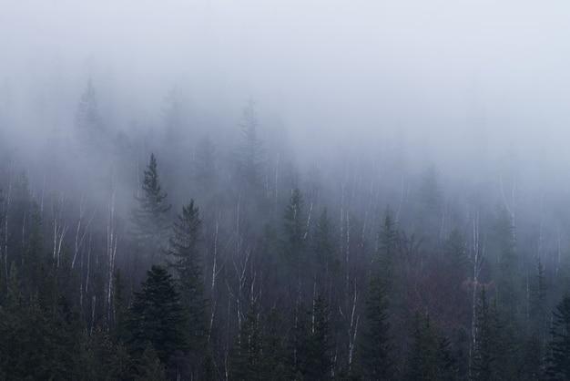 Floresta nevoenta na encosta de uma montanha nas montanhas dos cárpatos.