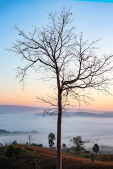 Floresta nevoenta pela manhã, lindo nascer do sol, névoa cobrindo o fundo da montanha