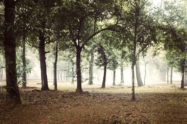 Floresta nevoenta