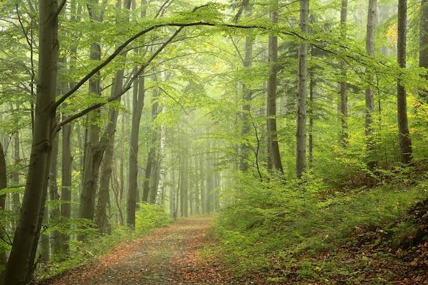 Floresta no início do outono após chuva com neblina ao longe