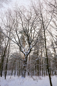 Floresta no inverno