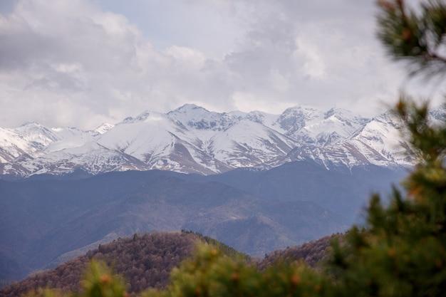 Floresta nuvens pico de montanha