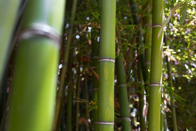 Floresta oriental de bambu à luz do dia