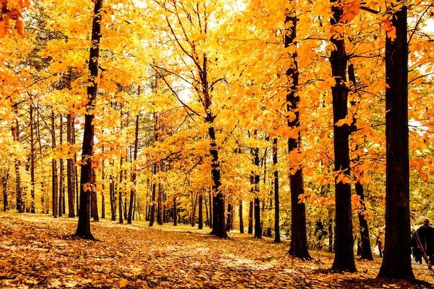Floresta ou parque com árvores com folhas amarelas dia, efeito de filtro