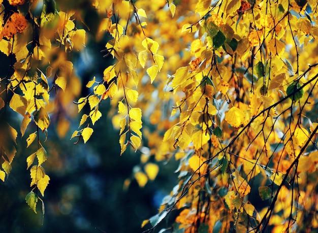 Floresta outonal dourada com raios solares