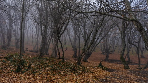 Floresta outonal enevoada