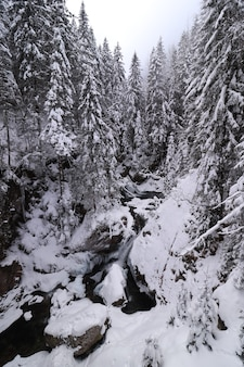 Floresta perene e algumas rochas no inverno, todas cobertas de neve