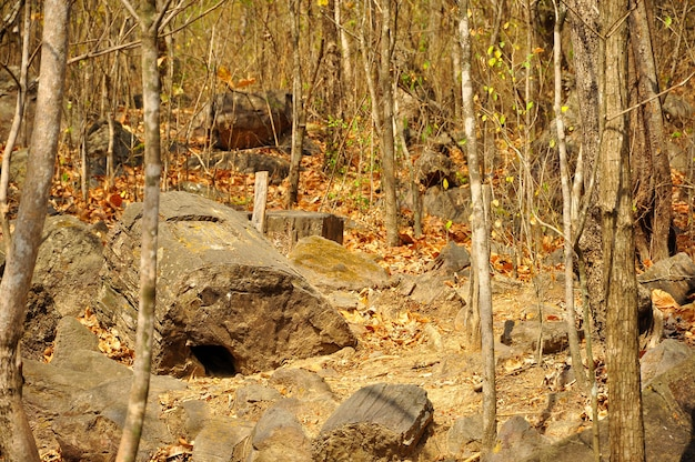 Floresta petrificada de puyango