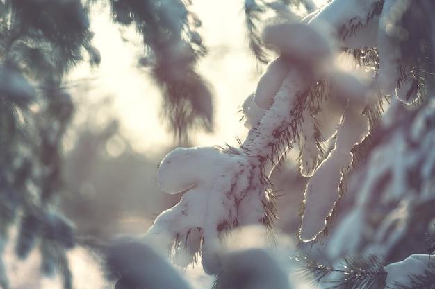 Floresta pitoresca coberta de neve no inverno