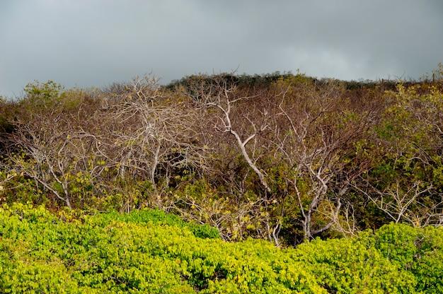 Floresta, playa, ochoa, ilha san cristobal, ilhas galapagos, equador Foto Premium
