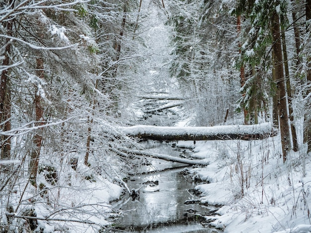Floresta profunda de inverno com um rio estreito