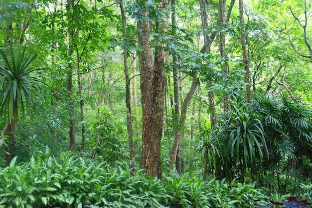Floresta profunda em chiang mai, tailândia