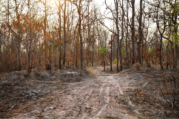 Floresta queimada no campo de thailnad