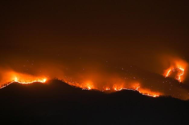 Floresta queimando árvores à noite